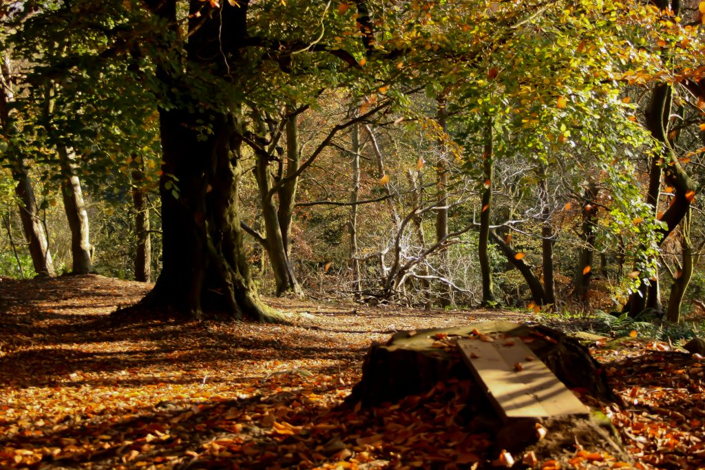 Forest (Image free to use from Flickr.com)
